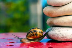 Snail from crossing an obstacle Stock Photos