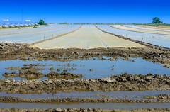 View on a flood field with cover Stock Photos