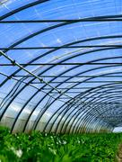 Growing plants in a greenhouse Stock Photos