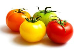 cluster of red yellow orange and green tomatoes - stock photo