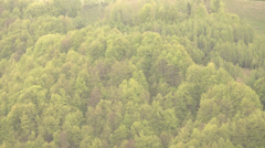 Ultra HD 4K Zoom in forest beautiful tree foliage summer day mountain wood green Stock Footage