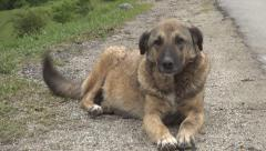 Abandoned, stray dog standing down, waiting affection, Homeless animal Stock Footage