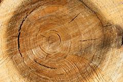 Pile wood Stock Photos