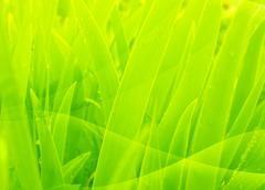 Stock Illustration of Abstract background of green color