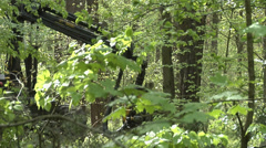 A harvester cutting down a tree in a green forest 2 Stock Footage