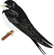 swallow - stock illustration