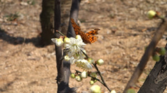 Butterfly collecting honey from flower Stock Footage
