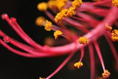 Flower stamen Stock Photos