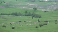 Stock Video Footage of Group of sheep with shepherd moving away, Herding Sheep on farm meadow