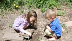 Kids Looking For Bugs 4k Stock Footage