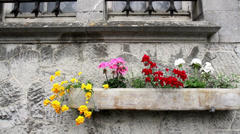 Flowers on the wall of Petit-Somme Castle (Septon, Belgium) Stock Footage