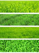 Stock Photo of Green grass