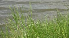 Ultra HD 4K Beautiful riverside river lake pond green grass ripple water relax Stock Footage