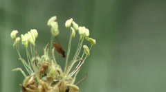 Grass seeds fruits background meadow Stock Footage
