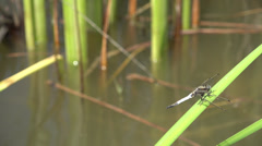 ULTRA HD 4K Closeup detail dragon fly insect macro bug antenna wing slim tail  Stock Footage