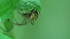 Spider web insect sitting macro Stock Footage