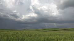 ULTRA HD 4K Amazing cultivated wheat field clouds dark sky hurricane meadow day Stock Footage