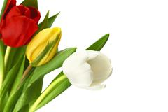 colorful tulips - stock photo