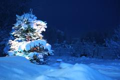 Winter pine tree Stock Photos