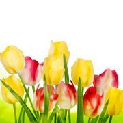 Stock Illustration of Beautiful tulips isolated on white. EPS 10