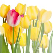 Bunch of tulips isolated on white. EPS 10 - stock illustration