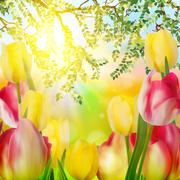 Beautiful tulips in spring time. EPS 10 - stock illustration