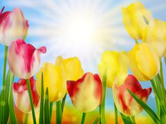 Beautiful spring flowers. EPS 10 - stock illustration
