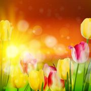 Sunset Over Field of Colorful Tulip. EPS 10 Stock Illustration