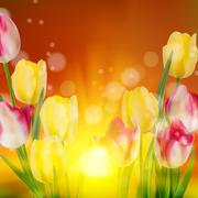 Tulip Field during Sunset. EPS 10 - stock illustration