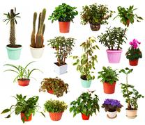 Set of houseplant in  pots. Isolated on white Stock Photos