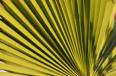 Textures of green palm leaves Stock Photos