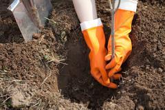 planting   tree - stock photo