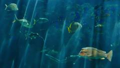 Underwater Tropical 96fps 02 Slow Motion x4 Tropical Fishes Stock Footage
