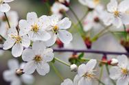 Blooms tree branch in  blur background Stock Photos