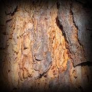 Beautiful colored old  pine bark, detail of natural  texture with vignette Stock Photos
