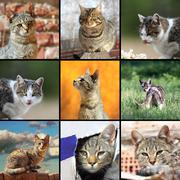 funny cats images, collage with domestic animals in different situations - stock photo