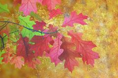 Artistic distressed autumn image, scratched red leaves over golden fall fores Stock Illustration