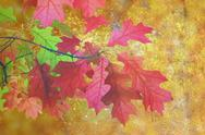 Stock Illustration of artistic distressed autumn image, scratched red leaves over golden fall fores