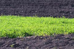 Contrasts on farmland, textural image of green grass and plough land in sprin Stock Photos