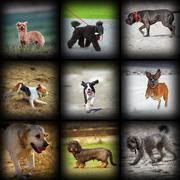 Happy dogs photos in one collage, different moments and breeds Stock Photos