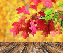 beautiful red leaves in autumn day  over wooden veranda, scenics from nature - stock illustration