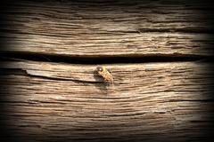 Bug on old oak wood plank on exterior facade of traditional building Stock Photos