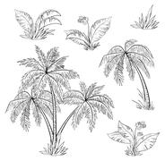 Palm trees, flowers and grass, contours Stock Illustration