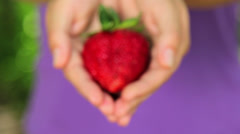 Fresh, juicy, strawberries in hands.Hand holds fresh strawberries. - stock footage