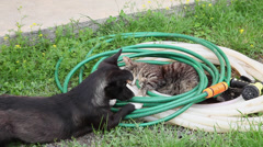 Cad and dog resting together, good friends in the garden,cute playful pets sleep Stock Footage