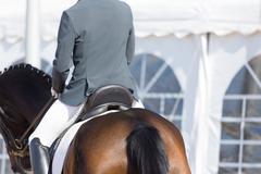 Spanish Horse - stock photo
