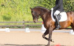 Spanish Horse Kuvituskuvat