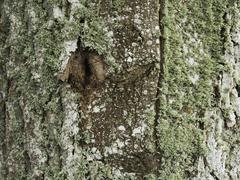 Poplar trunk covered with lichen Stock Photos