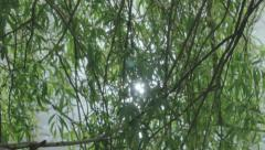 Shimmering Sun Light through Willow Tree Branches - 25FPS PAL Stock Footage