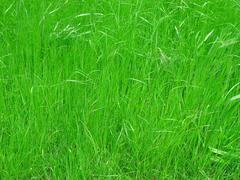 Ruoho niitty tausta Kuvituskuvat